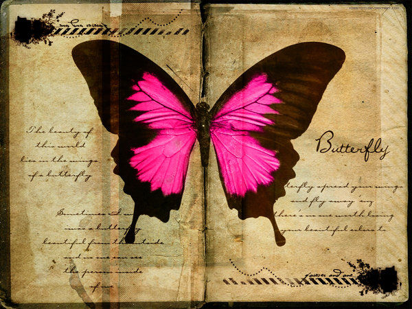 Butterfly_Wallpaper_by_MisSToTi