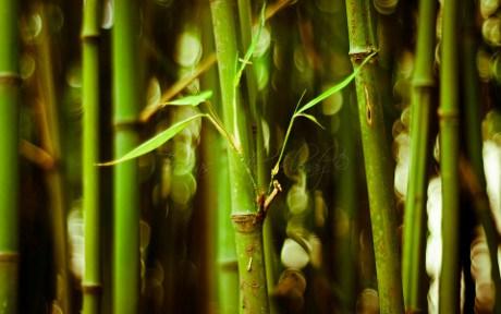bamboo_tree